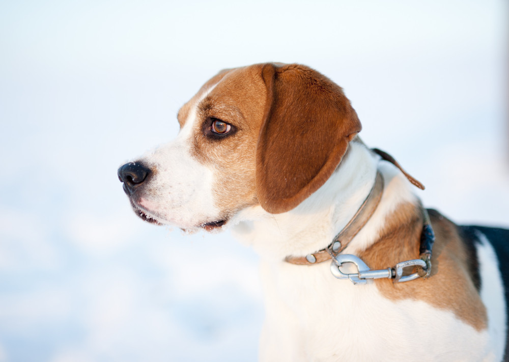 amish-dog-kennel